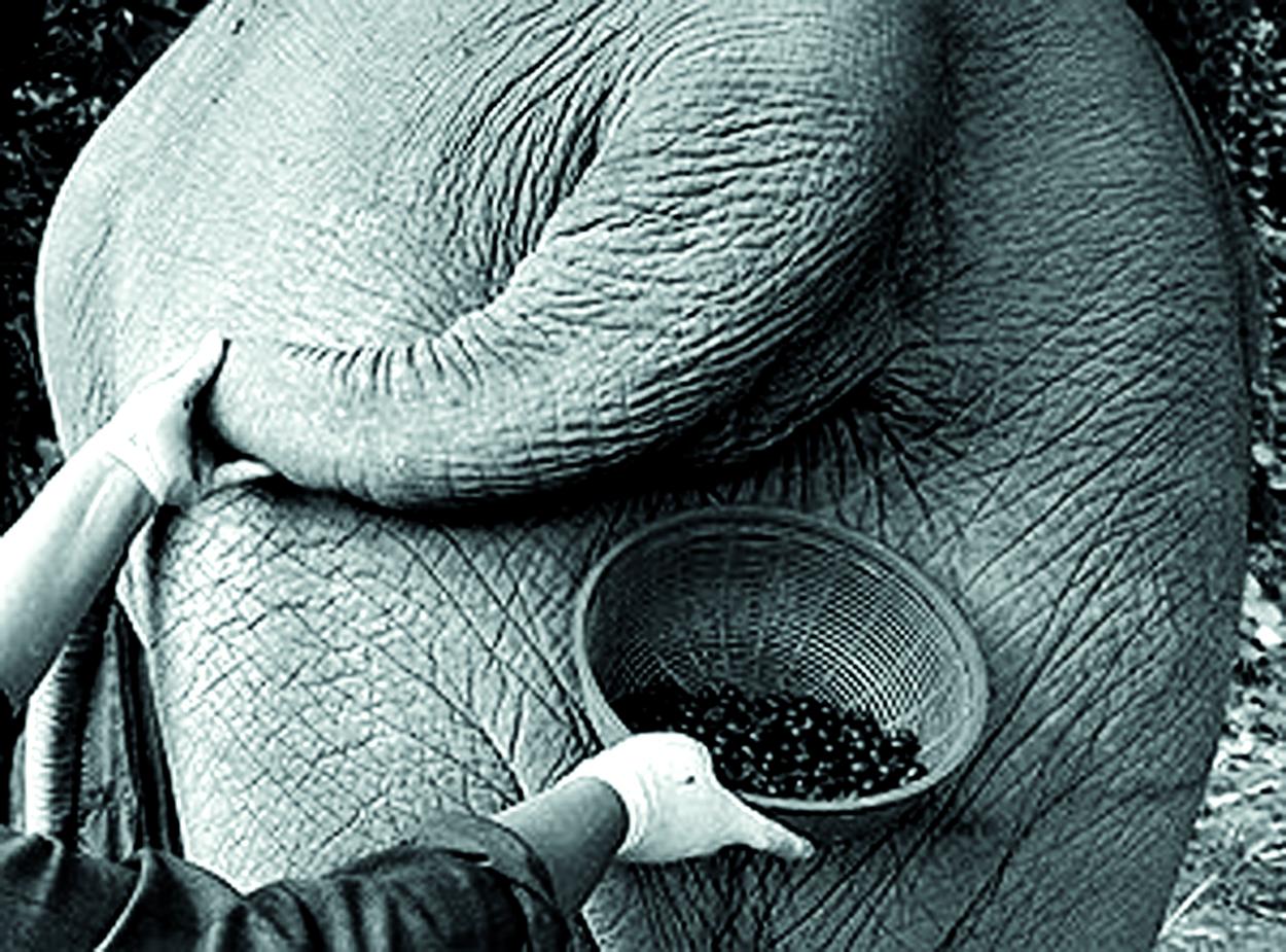 Actua, Trollekelder, Trollekrant, bier, onzinbier, Japans bier, Kono Kuro, olifantenuitwerpselen, koffiebonen