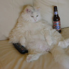 anti kater, kater, bierkater, bier, geen kater meer, preventie